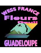 COUSSINS DE FLEURS DEUIL LA GUADELOUPE.